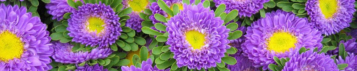 Frische bunte Blumen vom Lüscherhof