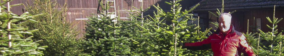 Der Weihnachtsduft: Christbäume vom Lüscherhof
