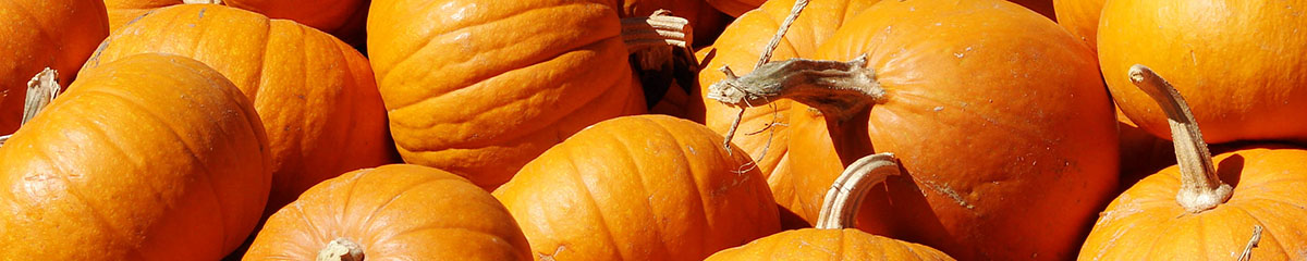 Kürbisse - der Herbstbote frisch vom Lüscherhof