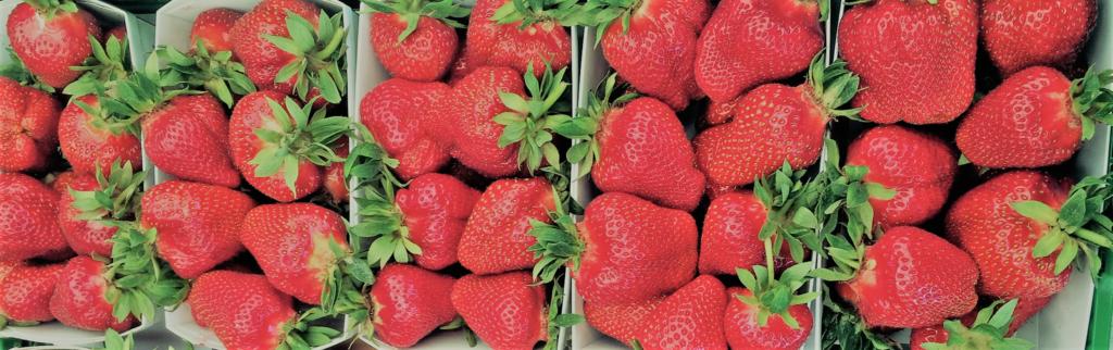 erdbeeren selber pfl cken und vom hofladen in wettingen bei baden ag. Black Bedroom Furniture Sets. Home Design Ideas
