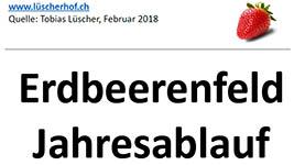 Das Erdbeerfeld im Jahresablauf (pdf)