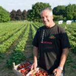 Ueli Lüscher mit frisch geernteten Erdbeeren